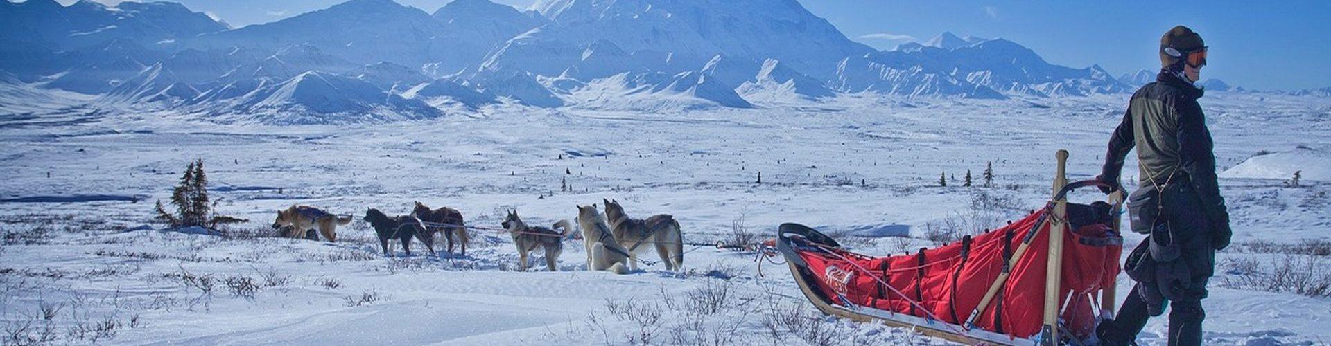 מזחלות כלבים באלסקה